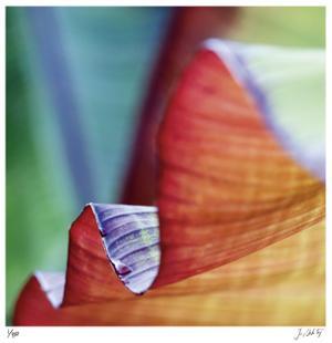Banana Leaves III by Joy Doherty