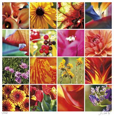 Floral Square Ensemble