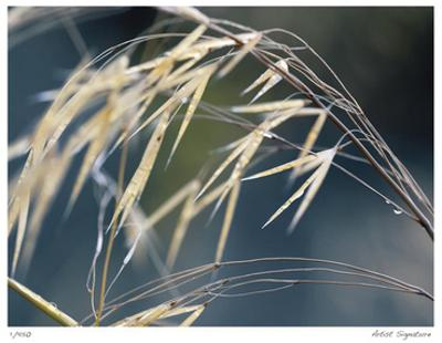 River Grasses II