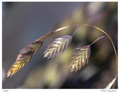 River Grasses III