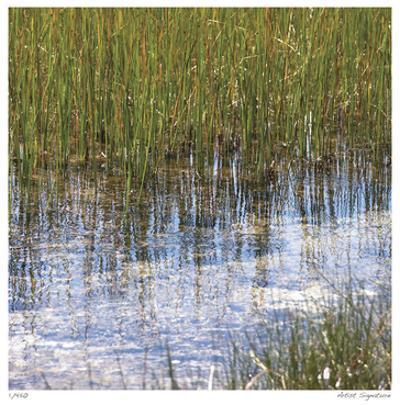 River Reeds I