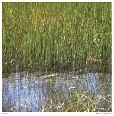 River Reeds II