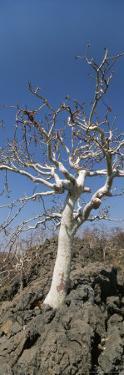 Close View of a Tree by Joy Tessman