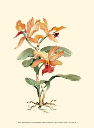 Orange Orchid by Joy Waldman