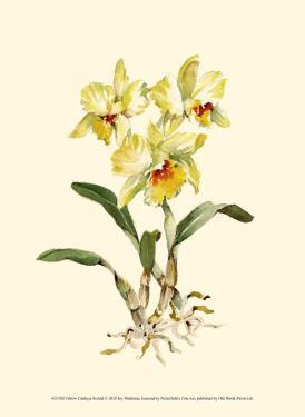 Yellow Cattleya Orchid by Joy Waldman