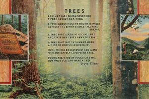 Joyce Kilmer Trees Poem, Forest