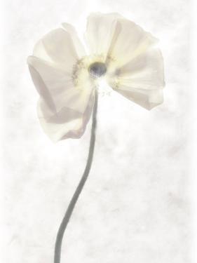 Still Life of a Flower by Joyce Tenneson