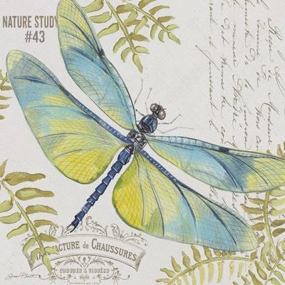 https://imgc.allpostersimages.com/img/posters/jp3423-b-botanical-dragonfly_u-L-Q1CAMJP0.jpg?artPerspective=n