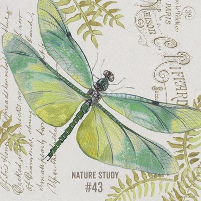 https://imgc.allpostersimages.com/img/posters/jp3424-b-botanical-dragonfly_u-L-Q1CAK2X0.jpg?artPerspective=n