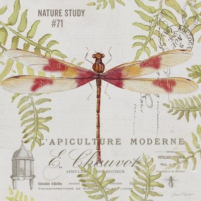 https://imgc.allpostersimages.com/img/posters/jp3425-botanical-dragonfly_u-L-Q1CAKOT0.jpg?artPerspective=n