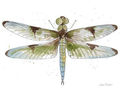 https://imgc.allpostersimages.com/img/posters/jp3440-dragonfly-bliss_u-L-Q1CALK90.jpg?artPerspective=n
