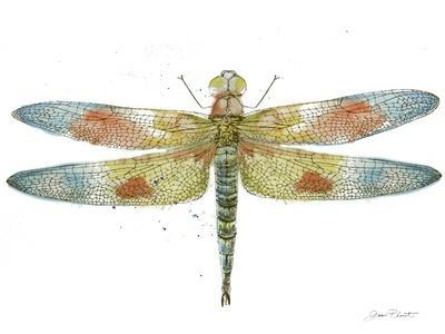 https://imgc.allpostersimages.com/img/posters/jp3441-dragonfly-bliss_u-L-Q1CAN0J0.jpg?artPerspective=n