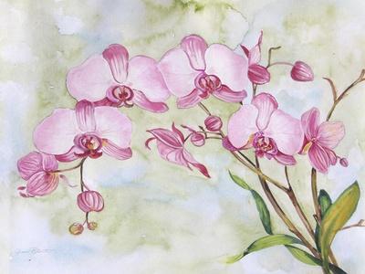 https://imgc.allpostersimages.com/img/posters/jp3881-orchids-pink_u-L-Q1CAPBC0.jpg?artPerspective=n