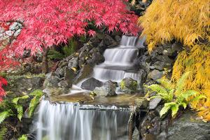 Backyard Waterfall with Japanese Maple Trees by jpldesigns