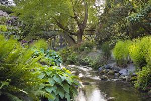 Stream under the Wooden Bridge by jpldesigns