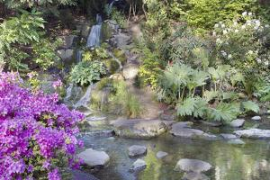 Waterfall at Crystal Springs Rhododendron Garden by jpldesigns