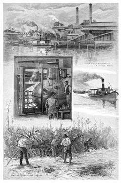The Sugar Industry, Richmond River, New South Wales, Australia, 1886 by JR Ashton