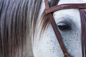 Close Up of Horse Wearing Bridle, Sierra De Gredos, Avila, Castile and Leon, Spain by Juan Carlos Munoz