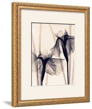 Japanese Iris by Judith Mcmillan
