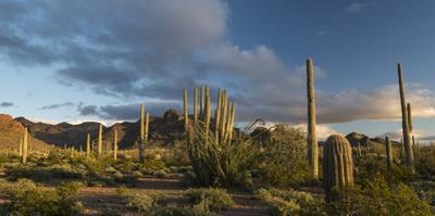 Arizona. Sunset over Desert Habitat, Organ Pipe Cactus National Monument by Judith Zimmerman