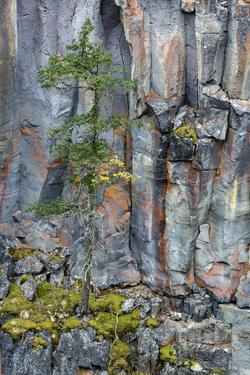 British Columbia. Basalt cliff with vegetation at Helmcken Falls, Wells-Gray Provincial Park. by Judith Zimmerman