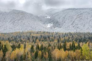 British Columbia, Canada. Mixed tree forest with light dusting of snow, Wells Gray Provincial Park. by Judith Zimmerman