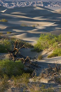 California. Death Valley National Park. Sunset Shadow on Sea of Sand Dunes, Mesquite Dunes by Judith Zimmerman