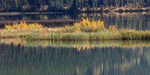 Canada, Alberta. Autumn grass reflections along Talbot Lake, Jasper National Park. by Judith Zimmerman