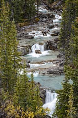Canada, Alberta. Nigel Creek, Banff National Park. by Judith Zimmerman