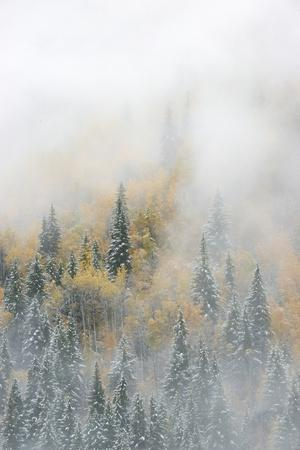 Canada, British Columbia. Early morning fog in a mixed tree forest, Wells Gray Provincial Park.