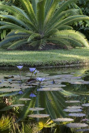 Florida, Tropical Vegetation, Flowering Water Lilies and Lush Palms