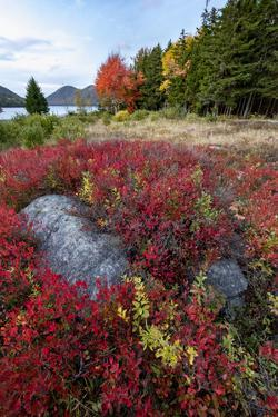 Maine. Boulders nestled among low bush blueberry, Autumn, Acadia NP. by Judith Zimmerman