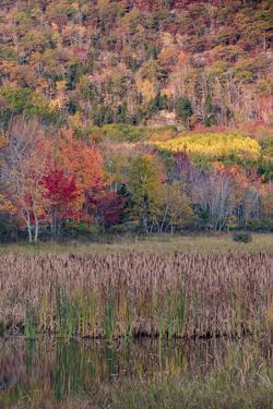 USA, Maine. Autumn foliage reflected in a pond, Acadia National Park. by Judith Zimmerman