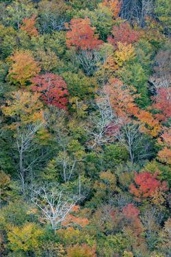 USA, Maine. Autumn foliage viewed from atop The Bubbles, near Jordan Pond, Acadia National Park. by Judith Zimmerman