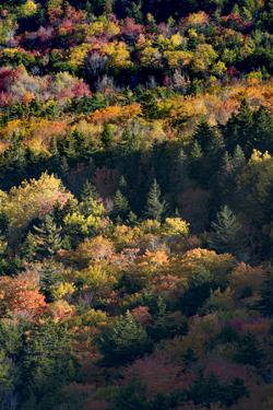 USA, Maine. Autumn foliage viewed from atop The Bubbles near Jordan Pond, Acadia National Park. by Judith Zimmerman