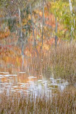 USA, Maine. Autumn reflections and grasses on New Mills Meadow Pond, Acadia National Park. by Judith Zimmerman