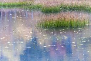 USA, Maine. Grasses and water lily pads with reflections, the Tarn, Acadia National Park. by Judith Zimmerman