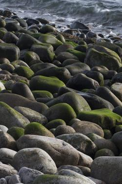 USA, Maine. Moss covered rocks and ocean, Boulder Beach, Acadia National Park. by Judith Zimmerman