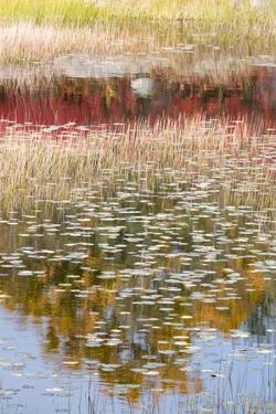 USA, Maine. New Mills Meadow Pond, Acadia National Park. by Judith Zimmerman