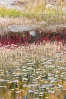 USA, Maine. Reflections, New Mills Meadow Pond, Acadia National Park. by Judith Zimmerman