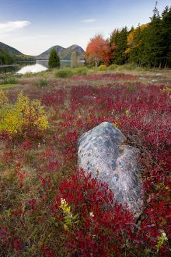 USA, Maine. The Bubbles and Jordan Pond in full autumn colors, Acadia National Park. by Judith Zimmerman