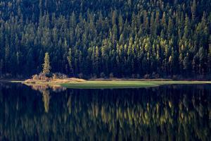 USA, Montana. Lone pine on island of green with reflections, Salmon Lake State Park. by Judith Zimmerman