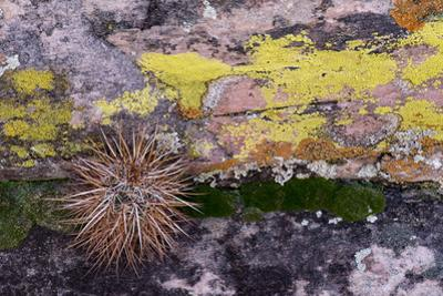 USA, Nevada. Small cactus in Gold Butte National Monument by Judith Zimmerman