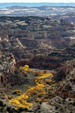 USA, Utah. Autumn cottonwoods and sandstone formations in canyon, Grand Staircase-Escalante NM by Judith Zimmerman