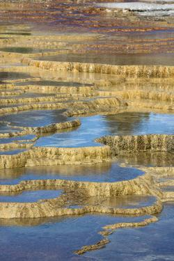 USA, Wyoming. Mineral deposit formation. Mammoth Hot Springs, Yellowstone National Park. by Judith Zimmerman