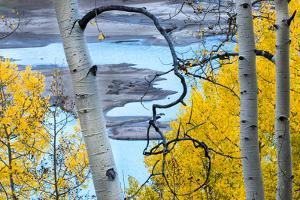 Yellow Autumn Leaves on Turquoise Aspen Waters, Silver Jack Reservoir, Uncompahgre National Forest by Judith Zimmerman