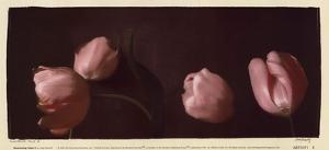 Illuminating Tulips II by Judy Mandolf