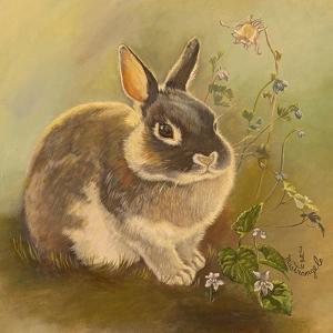 Rabbit in Columbine by Judy Mastrangelo