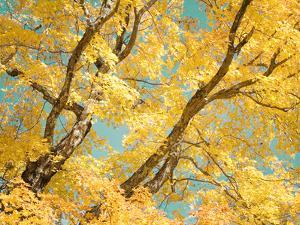 Autumn Tapestry V by Judy Stalus