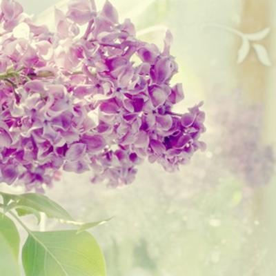 Lilac Reflection by Judy Stalus